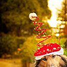 Merry DOG christmas by Carol Yepes
