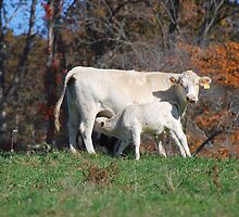 Mother and Child! by barnsis