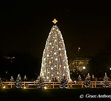 The National Christmas Tree by GraceNotes