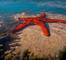 Star Fish Hunting,Great Ocean Road. by Darryl Fowler