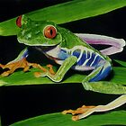 Treefrog by Tony Sturtevant