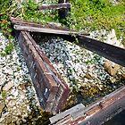 florida dock- fallen in by nolenphotograph