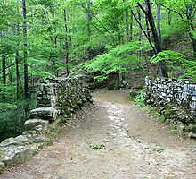 Poinsett Bridge by Roger Jewell