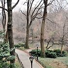 A Cold Blustery Central Park by joan warburton
