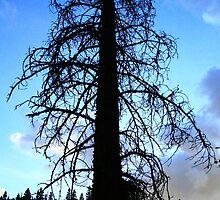 Blue Dusk - South Fork, CO by Dirtyjerz
