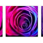 Neon Roses Triptych II by Lesley Smitheringale
