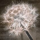 dandelion in brown by Aimelle