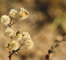 Seeds Of Life  by Linda Yates