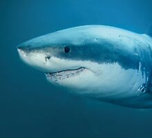 Great White Neptune Island by Chris Buxton