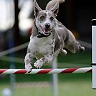 West Oz Agility Dogz by Robyn Evans