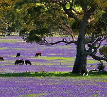 Purple fields by Jessy Willemse