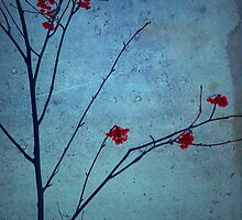 Red Berries, Blue Sky by Tara  Turner