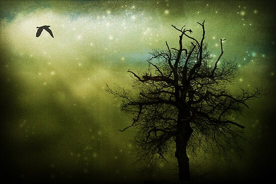 Nightbird by © Kira Bodensted