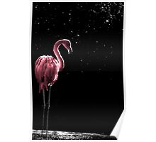 Flamingo in Pink Poster