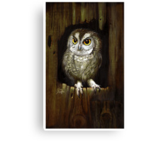 Screech Owl  Canvas Print