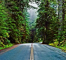 US Highway 101, Redwood National Park by Bryan D. Spellman