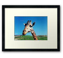 Giraffe HDR Framed Print