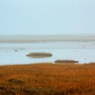 costal wetlands by FraserJ