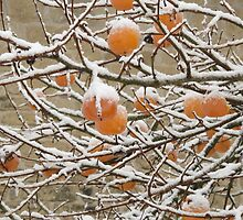 Snow and Kaki Fruit by Pamela Jayne Smith