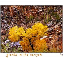 Giants in the Canyon by Terry Temple
