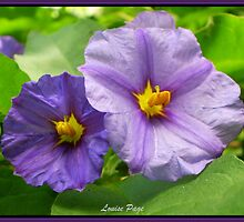 Pretty in Purple by Louise Page