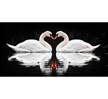 Swans Photographic Print