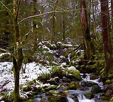 Haystack Creek, winter snow by Allan  Erickson