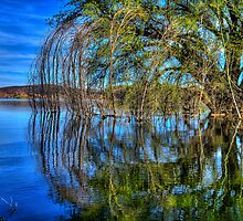 One Willow by Bob Larson