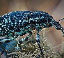 Moose Bug by Robert Chester Lee