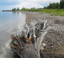 Driftwood On The Beach...Meaford Harbour by Tracy Faught