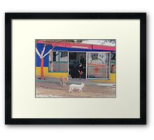 Mexico Dogs HDR  Framed Print