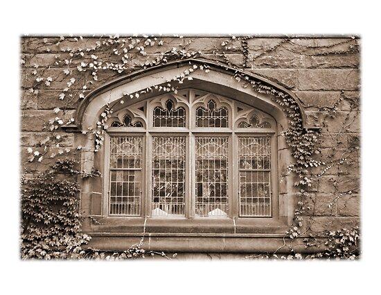 Princeton University by jaeepathak