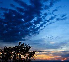 Savannah Sunset by Nickolay Stanev