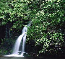 Roadside Waterfall, Smoky Mountains by Tony Ramos