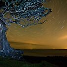Pohutukawa at night by Paul Mercer