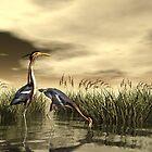 Purple Heron by Walter Colvin