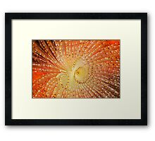 Aquatic Fireworks Framed Print