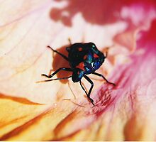Colourful Beetle on Hibiscus Flower. by Mywildscapepics