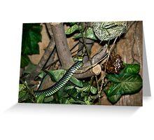 Boomslang - Tree Snake Greeting Card