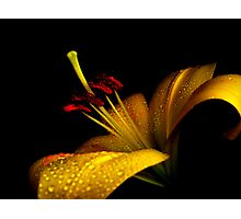 Lovely Lily. Photographic Print