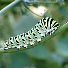 Caterpillar by Sviatlana