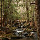 Wolf Tree Walk, New Hampshire by brooke1429