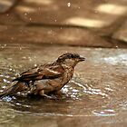 Sparrow  by anandbakshi