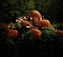 Celebration of Harvest by SerenityPhoto