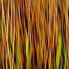 Grasslands #2 by Kitsmumma