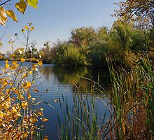 Duff Lane Pond  by Rich Summers