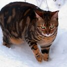 Domino in the snow by evilcat