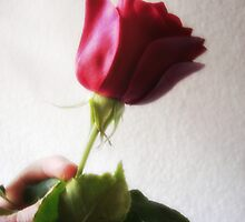 Dark Red Rose - Temptation by Christopher Johnson