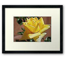 Lemon Delight Framed Print