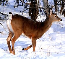 Whitetail Doe by Larry Trupp